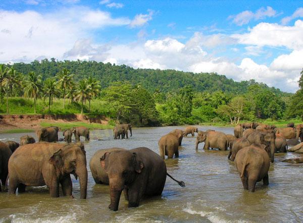 Шри ланка туры. Шри-Ланка туры. Недорогие туры на Шри-Ланку. Отели Шри-Ланка. Цены Шри-Ланка. Шри Ланка цены. Шри Ланка отели цены. Экскурсии на Шри Ланке